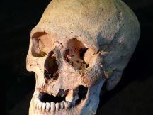 From Elise Naumann via USA Today. Photo of a Viking skull.