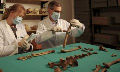 Photo from The Guardian of scientists examining Queen Eadgyth's remains