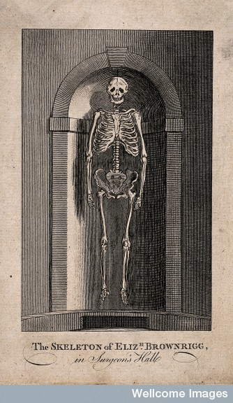 The skeleton of Elizabeth Brownrigg, displayed in a niche at Credit: Wellcome Library, London.