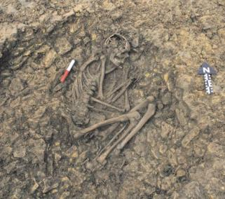"""Rusty"" the Iron Age skeleton found during construction of a parking lot for a pub."