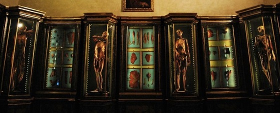 "From Wikipedia, Lelli's ""flayed"" men on display at the Palazzo Poggi"