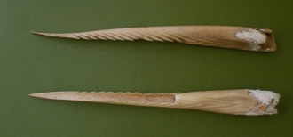 Human bone spear tips. Photo from of the CNMI Historic Preservation Office via Guampedia