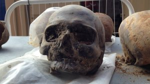 Picture of one of the 20 skulls recovered from the Crossrail project in 2013.
