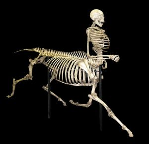 The Centaur of Tymfi commissioned by Bill Willers from Skulls Unlimited.  Image Credit: Wikipedia