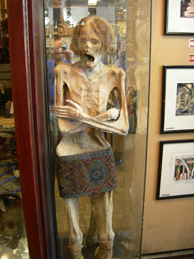 Syliva the Mummy at Ye Old Curiosity Shop in Seattle, WA.  Image Credit: Wikipedia