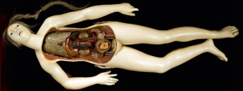 19th Century Anatomical Venus from the Wellcome Collection.  Image Credit: Wellcome Collection