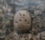 The skull belonging to a Martyr of Otranto with 16 holes drilled into it. Image credit: Gino Fornaciari/University of Pisa.  Click here for full-size image.