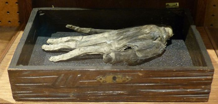An example of a Hand of Glory.  Image credit: Badobadop via Wikipedia