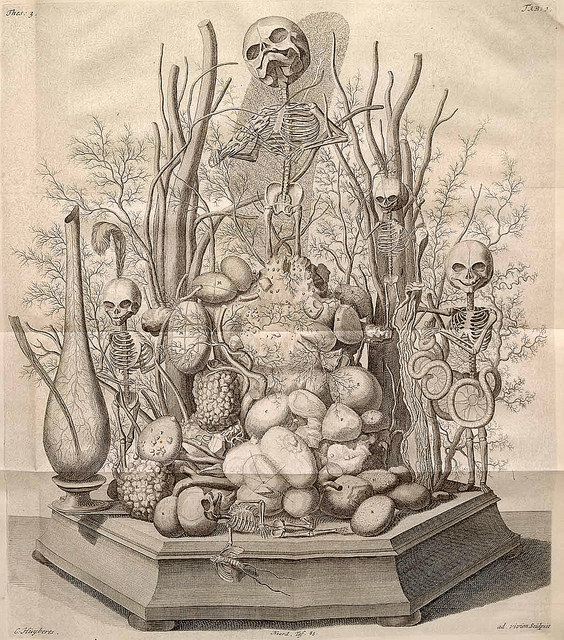 Engraving of a tableau by Frederik Ruysch  (1744) Etching with engraving. Image credit: Maia Valenzuela on Flickr
