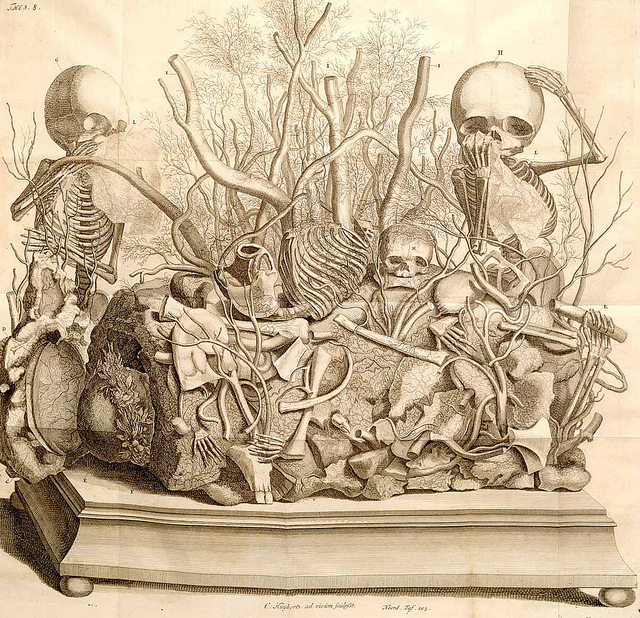 Engraving of a tableau by Frederik Ruysch  (1744) Etching with engraving. National Library of Medicine.