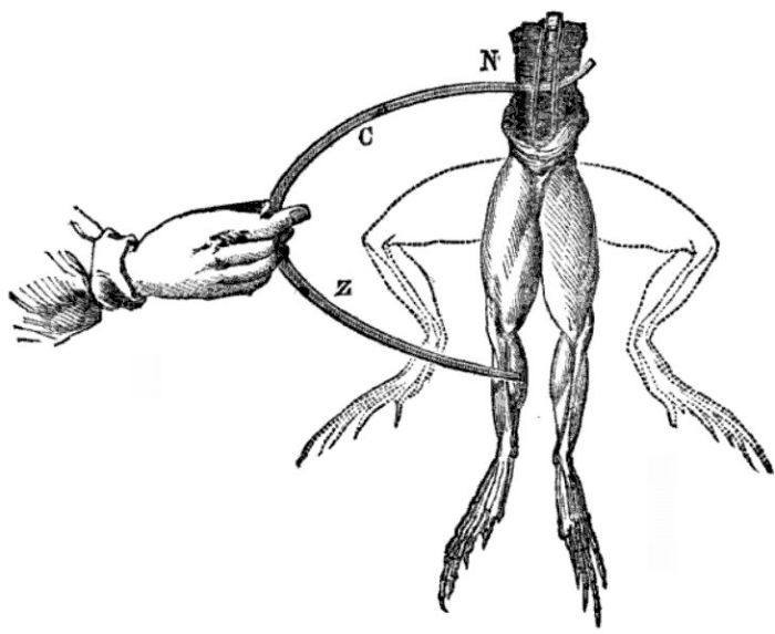"""Galvanic"" electrodes applied to a frog's legs.  From The science of common things: a familiar explanation of the first principles of physical science. For schools, families, and young students. Image Credit: Wikipedia."